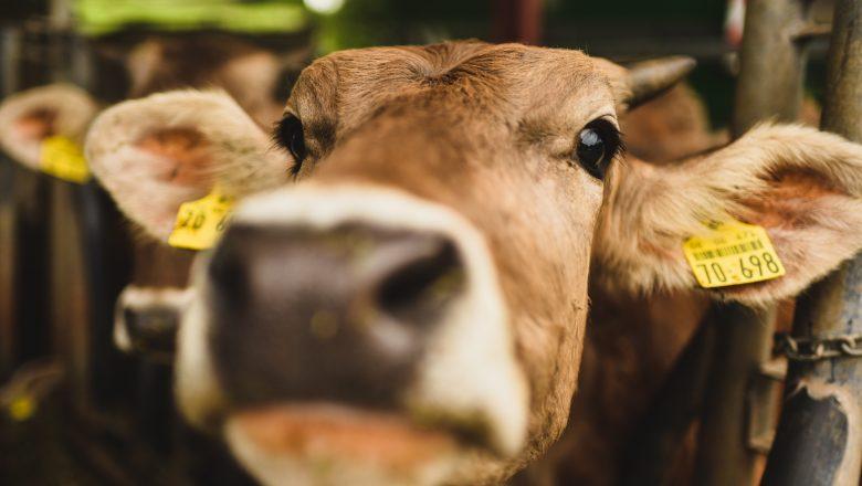 Livestock for Business